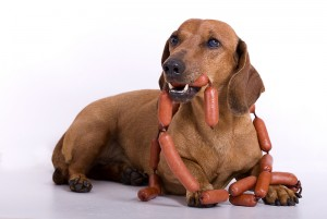 Should Dogs Eat Hot Dogs